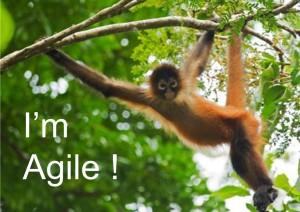 I'm Agile